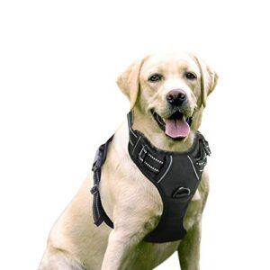 Correas Perros Pequenos Antitirones Beneficiate De La Oferta Aqui